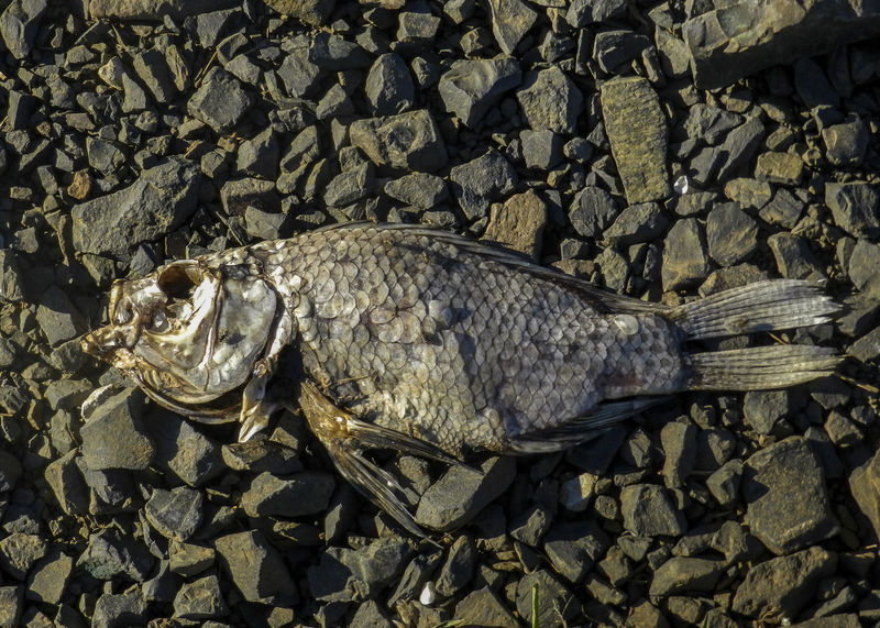 Fish Nature Animal Themes Close-up Dead Fısh Death Life Fragility Lake Sunlight