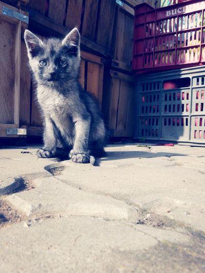 gato First Eyeem Photo