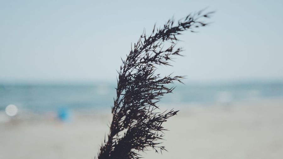 Close-up of plant on beach against sky