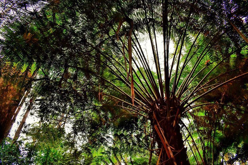 Tree Growth Low Angle View Palm Tree Nature Tree Trunk Outdoors Branch No People Beauty In Nature Green Color Day Forest Sky