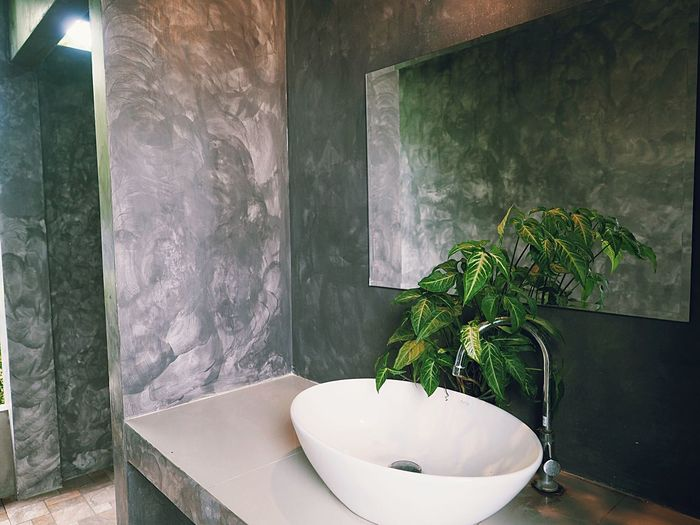 Plant Indoors  Growth Potted Plant No People Bathroom Wall - Building Feature Nature Built Structure Day Architecture Green Color Home Interior Domestic Bathroom Window Home Wall Sink Leaf