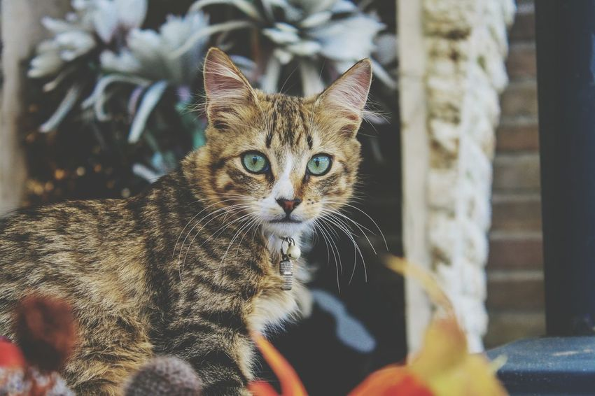 Beauty In Nature Cat Cats Cats Of EyeEm Cat Lovers Photography Cat Photography Cat Portrait Portrait Cute Little Meow Pretty Whisker Fur Flower Nature Beautiful Animal Animal Themes EyeEm Selects Pets Portrait Leopard Looking At Camera Domestic Cat Feline Close-up