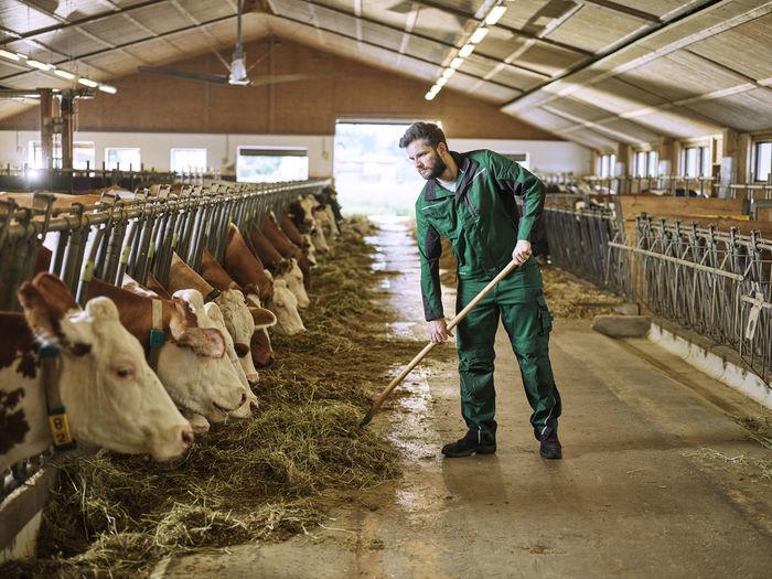 Full length of baby standing in farm