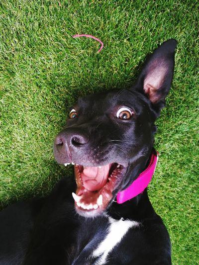 Dogselfie AdoptDontShop Adoptanocompres Happiness Domestic Animals Dog Dogslife First Eyeem Photo Pet Portraits