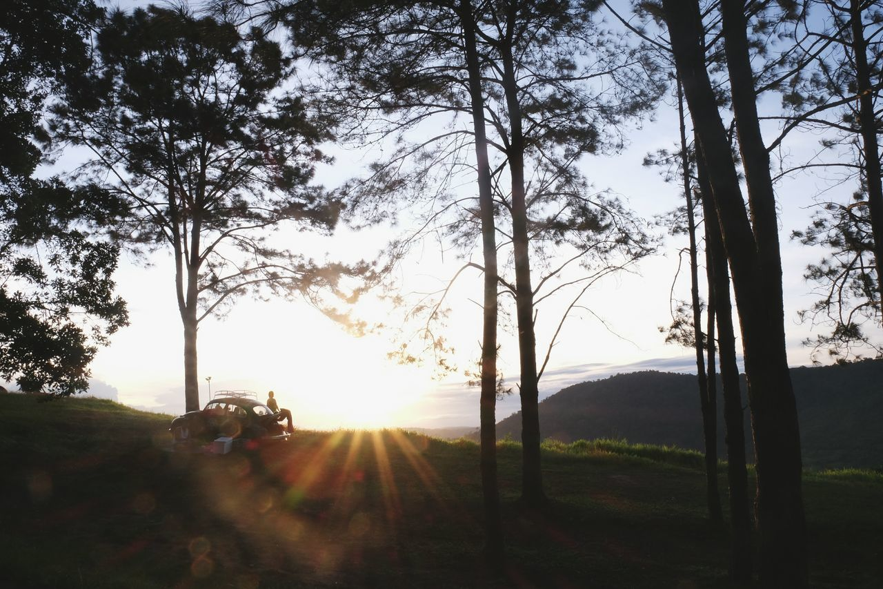tree, nature, sunlight, growth, beauty in nature, sky, sun, landscape, tree trunk, outdoors, sunset, day, scenics, real people