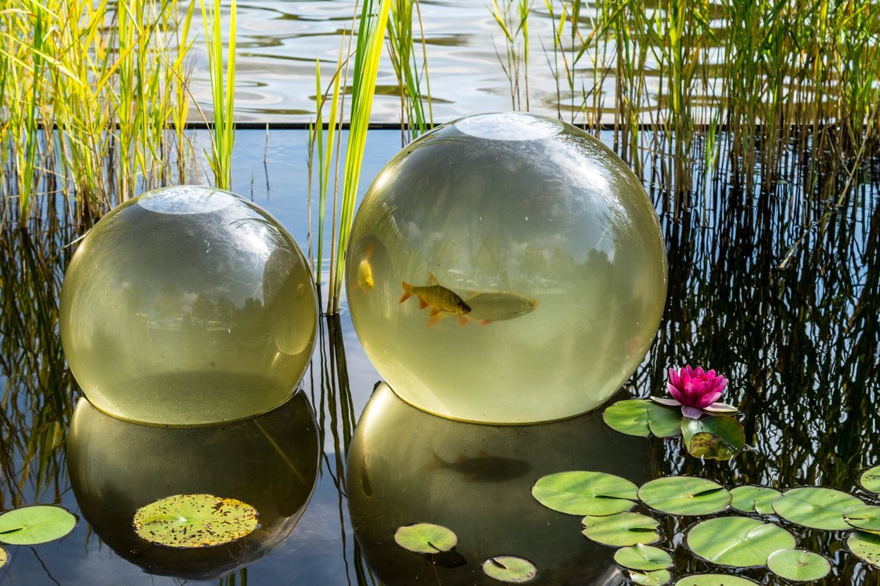 plant, water, reflection, nature, leaf, green color, no people, plant part, close-up, lake, transparent, floating on water, water lily, beauty in nature, floating, day, glass - material, outdoors, swimming, leaves, lotus water lily