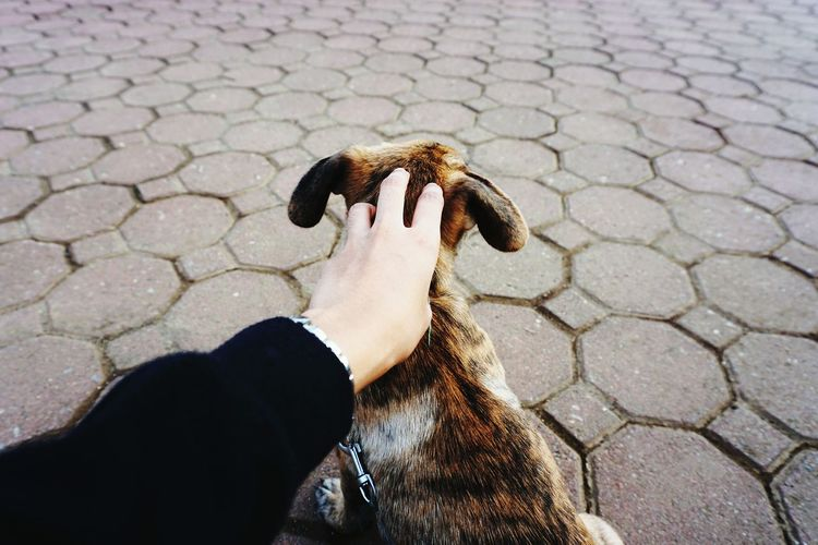 Cropped Hand Pampering Dog On Footpath