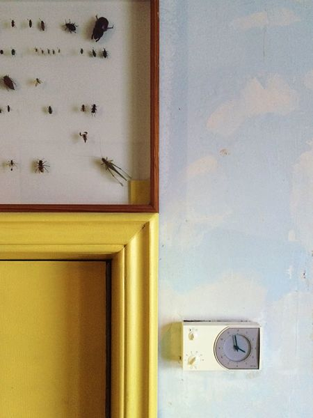 Insects  Wall Closet Dead Animals Three