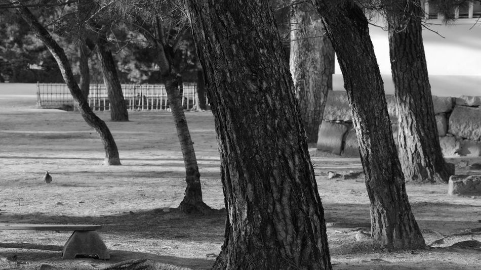 Trees & Pigeon Castle Park Trees Silhouettes Trees Shadow EyeEm Nature Lover Hello World Enjoying Life Travel Photography