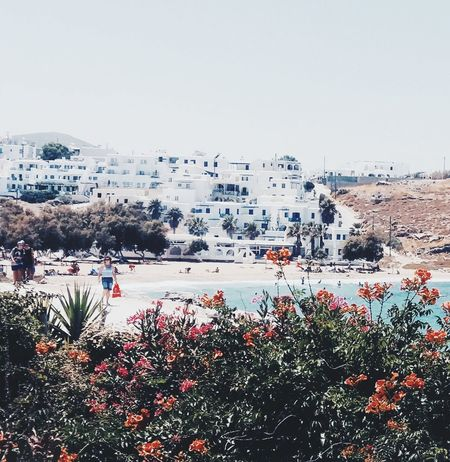 Paros island . Greece Summer Greek Islands Greece White House Nature Flowers White House Landscape Postcard Nature Island Water
