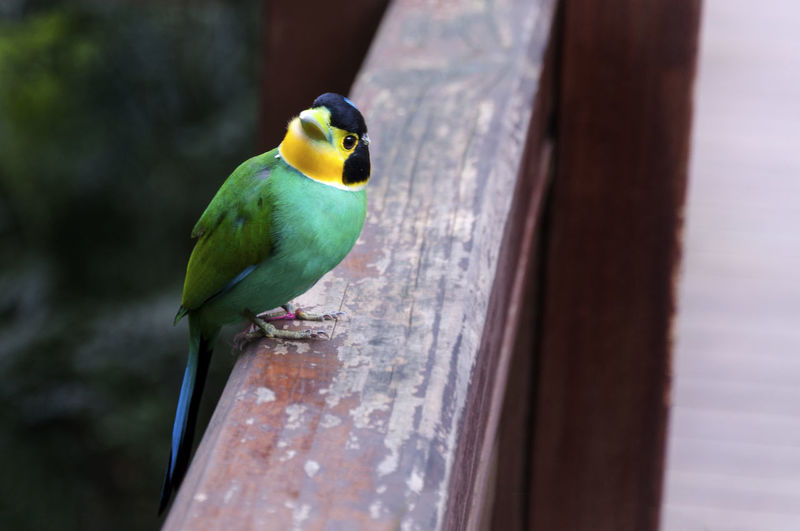 Close-up of bird perching on wooden railing