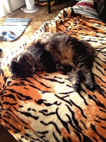 Cat Baby Love Sleeping Cute
