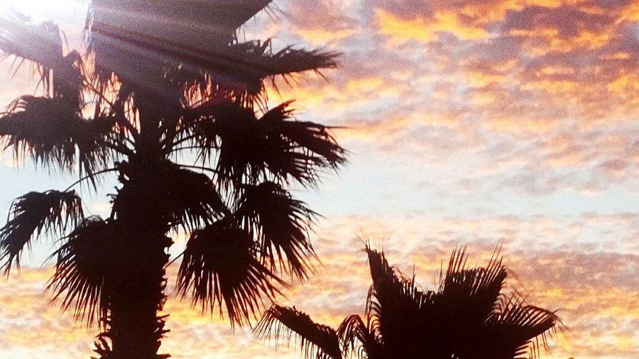 Sky Palm Tree Silhouette Galveston 5exas A New Beginning