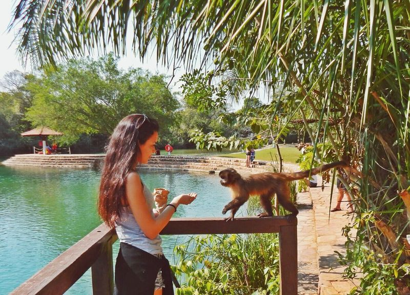 Enjoying Life Paraiso Natural Mato Grosso Do Sul Taking Photos Cute Animals Bonito - MS Cute Pets Monkey Paraisonatural
