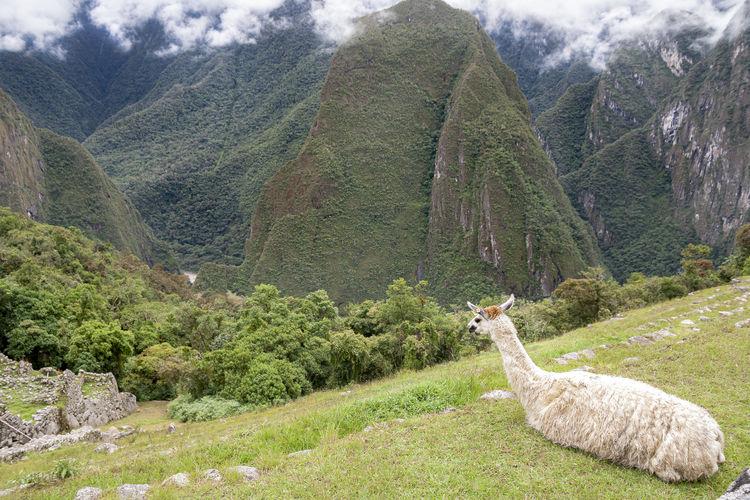 Andes Machu