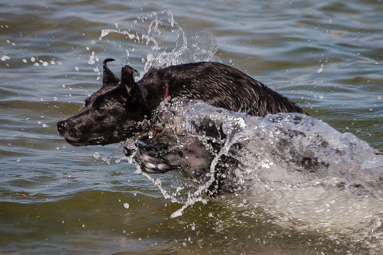 Black dog swimming in lake