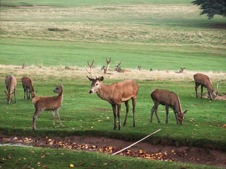 Deer Nottingham Nottinghamshire Togetherness Wilfred Zoology