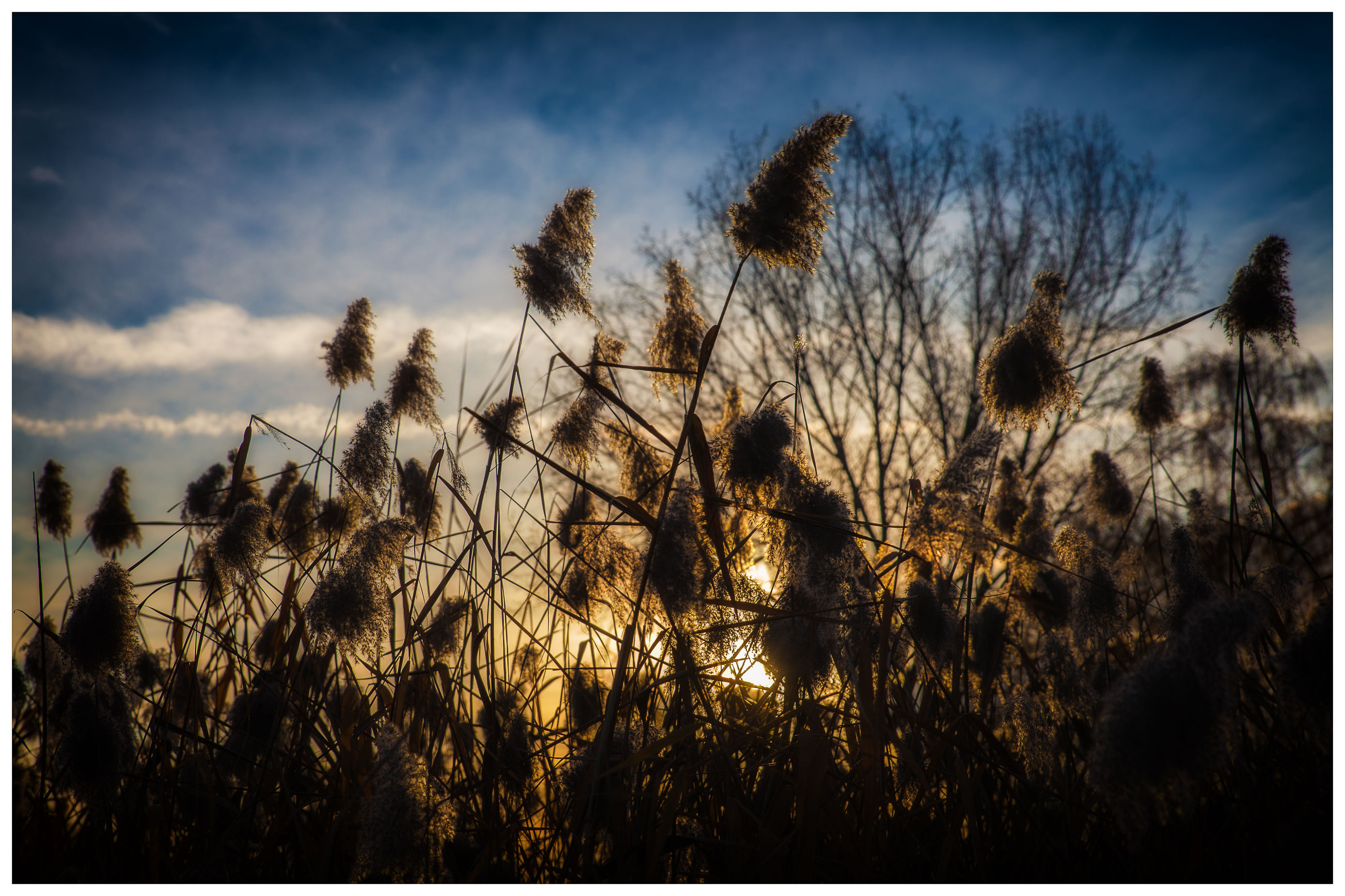 nature, sky, growth, sunset, silhouette, tranquil scene, no people, tranquility, outdoors, tree, beauty in nature, plant, scenics, sun, timothy grass, day