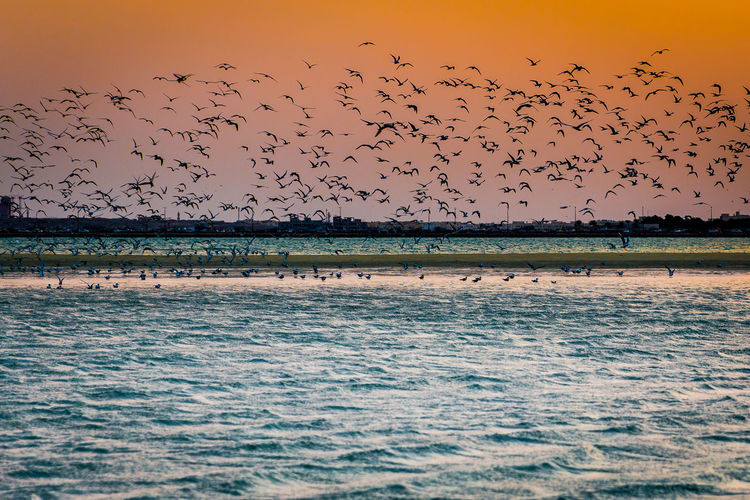 Animal Themes Animal Wildlife Animals In The Wild Beauty In Nature Bird Colony Flamingo Flock Of Birds Flying Following Landscape Large Group Of Animals Mid-air Migrating Motion Nature No People Outdoors Scenics Sea Sky Spread Wings Sunset Togetherness Water