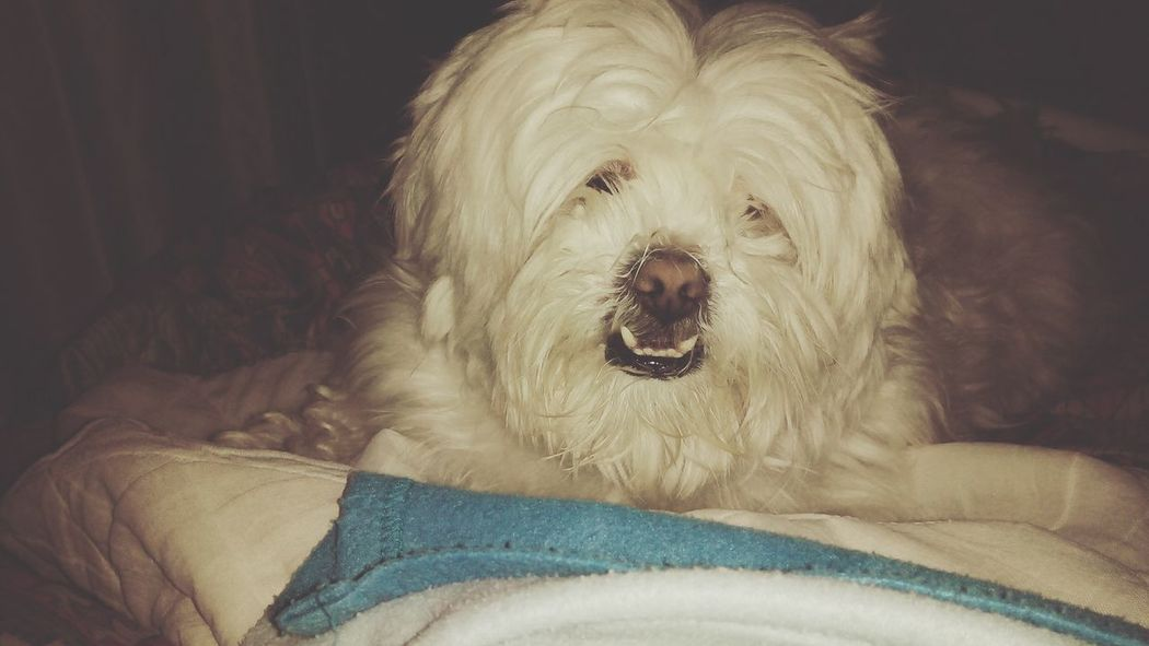 Peluche ♥ My Dog