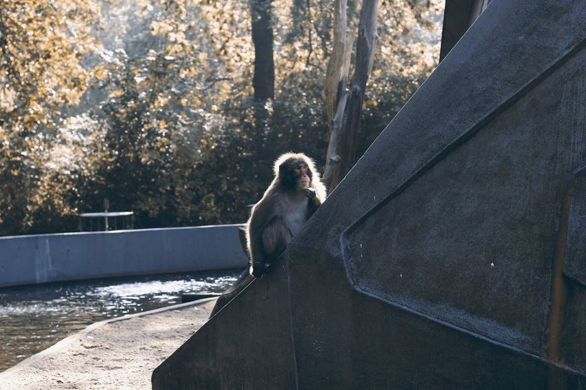 Naturelovers Nature Photography Animelover Animal Themes Outdoors Mammal Day Animals In The Wild Animal Wildlife Monkey Nature Water Tree No People Perching Retaining Wall Portrait Sitting