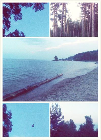 Trees And Sky Water Sea Beach^^