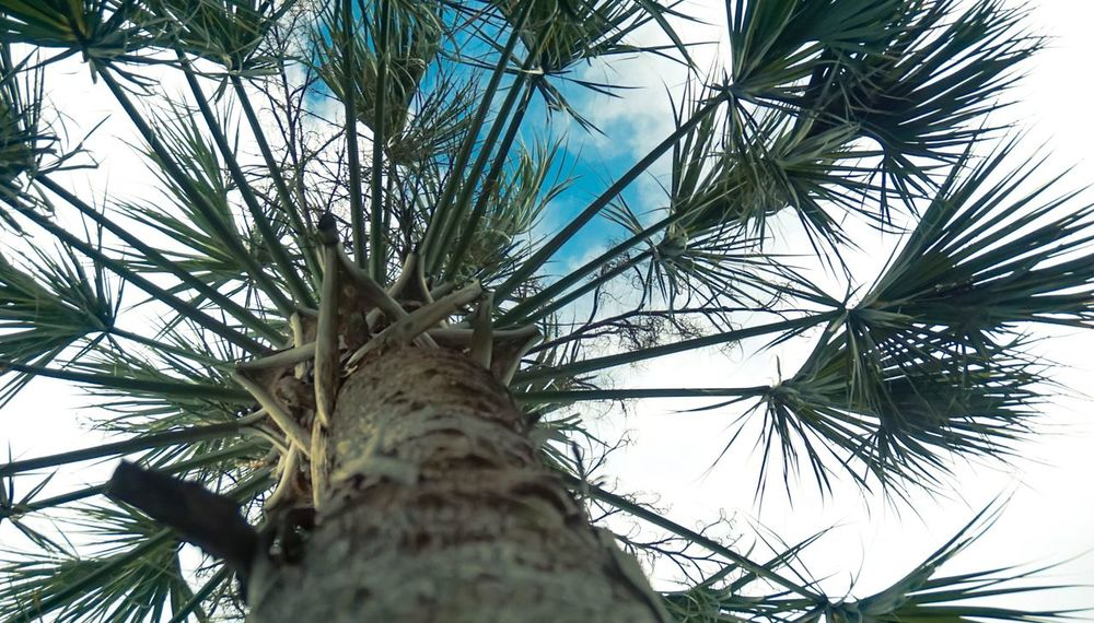 Tree Low Angle View Palm Tree Green Color Nature Outdoors California Love Photooftheday Vscocam VSCO Travel No People Beauty In Nature Sky Leaf Close-up Explore