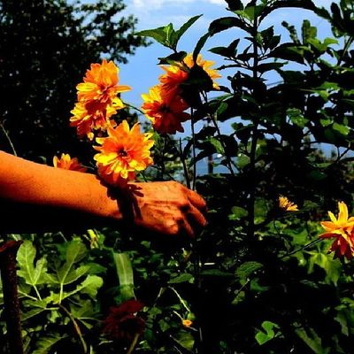 Doğa Arşiv çiçek Giresun eynesilrenk ?