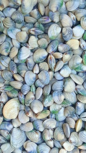 SHELLFISH  Seaside Beach Beachlife Seafood Shells Oceanside Gourmet Pipi Cockles