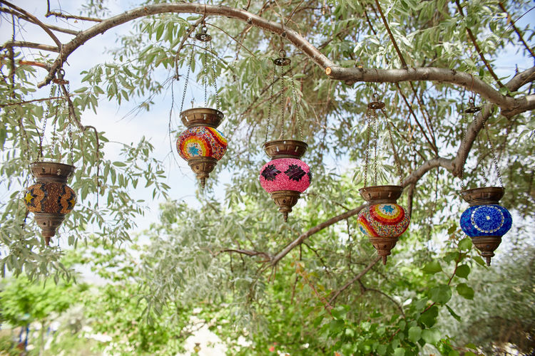 Low angle view of flowering plants hanging from tree