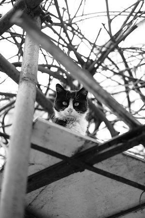 Homeless cat with angry face. Beijing, China Fujifilm X-E2 Street Photography Black And White Cat City Life Cat Lovers Homeless Cats Angry Face