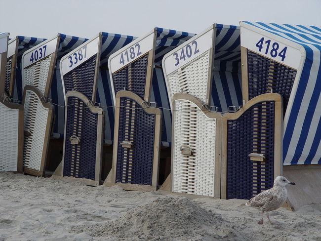 Beach Chairs at the German Coasts of Norderney and Cuxhaven Beach Beach Chair Beach Chairs Beach Life Beach Photography Beachphotography Blue Cuxhaven Küste No People Norderney Nordsee North Sea Relax Relaxing Relaxing Moments Relaxing Time Sand Strand Strandkorb Stripes Pattern Sunshine Vacation Vacations White