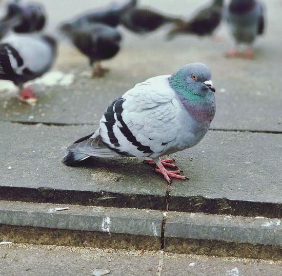 Happy Birds🐦⛅ Perfect Day First Eyeem Photo 🐦birds Love Songbird