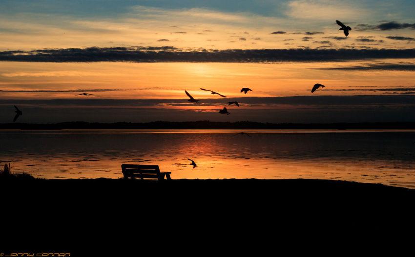 Sunset Animal