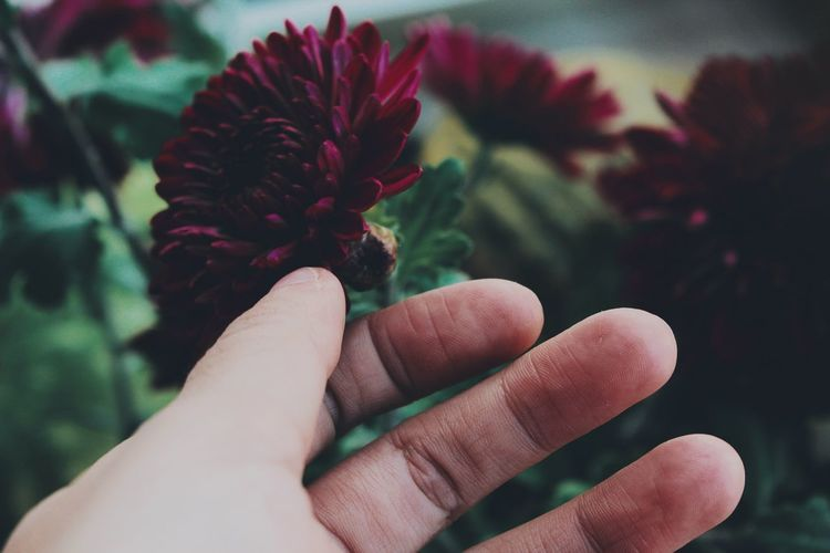 EyeEm Selects Human Body Part Human Hand Close-up Flower Nature One Person Touching Touch Delicate Hand