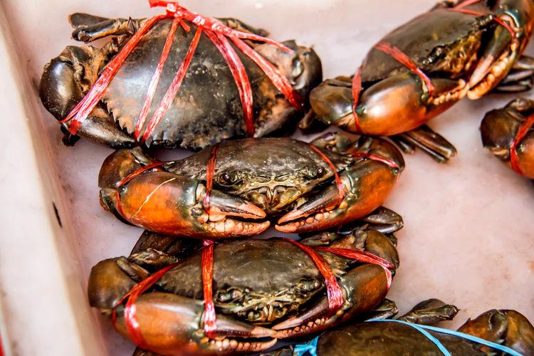 Seafood crab,