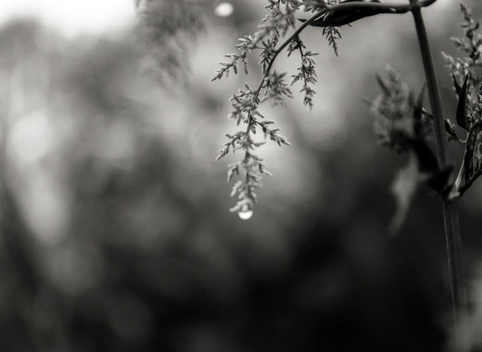 Blackandwhite Monochrome Medium Format Film Photography Filmisnotdead Cold Temperature Drop Winter Backgrounds Close-up RainDrop Wet Water Drop