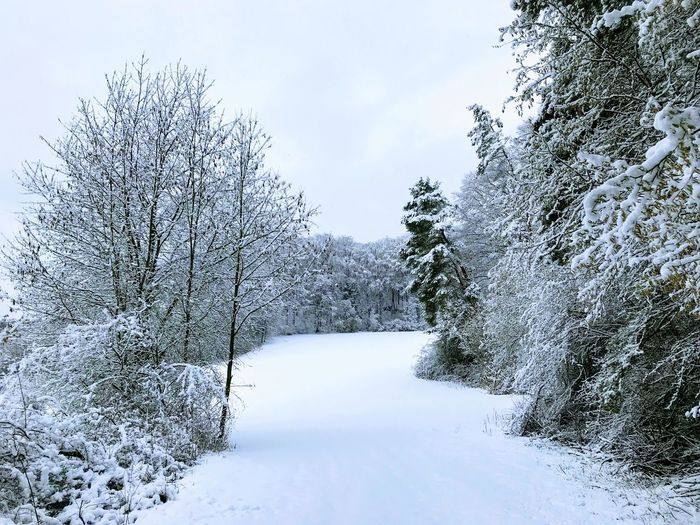 Snow Winter Cold Temperature Nature Tranquility Beauty In Nature Shades Of Winter Bare Tree No People Outdoors Tree Day Sky Tranquil Scene Scenics Landscape