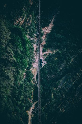 High Angle View Of Railway Bridge Amidst Trees