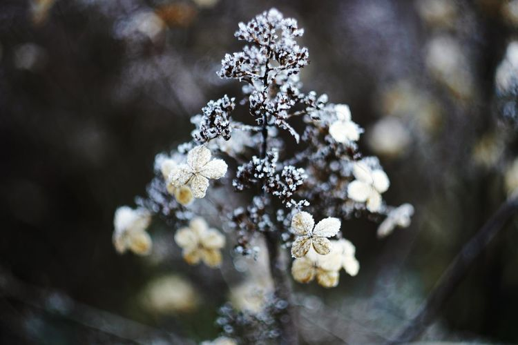 Close-Up Of Frost On Flowering Plan