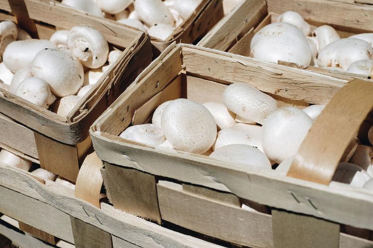 Close-up Day Food Freshness Healthy Eating Mushroom Mushrooms No People Variation