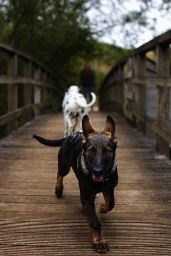 Domestic Pets Domestic Animals Canine Mammal Dog One Animal