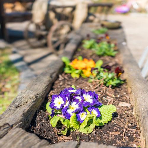 Spring has