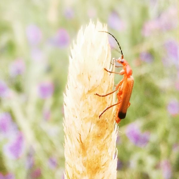 Insect One Animal Animals In The Wild Close-up Animal Themes No People Butterfly - Insect Plant Nature Day Focus On Foreground Grass Flower Beauty In Nature