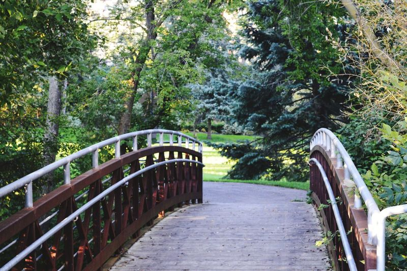I wonder what's on the other side. Nature Outdoors Sunny Day Tree Footbridge Railing Pathway The Way Forward Walkway