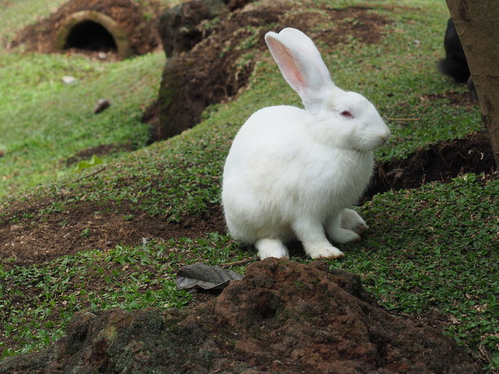 Pure white One Animal Grass Domestic Animals Pets Animal Themes Nature Rabbit 🐇