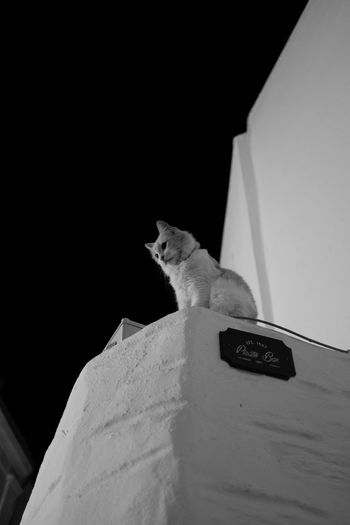 Looking Down Blackandwhite Cat Domestic Animals Domestic Cat Feline Low Angle View Mammal Night No People One Animal Pets Sitting White