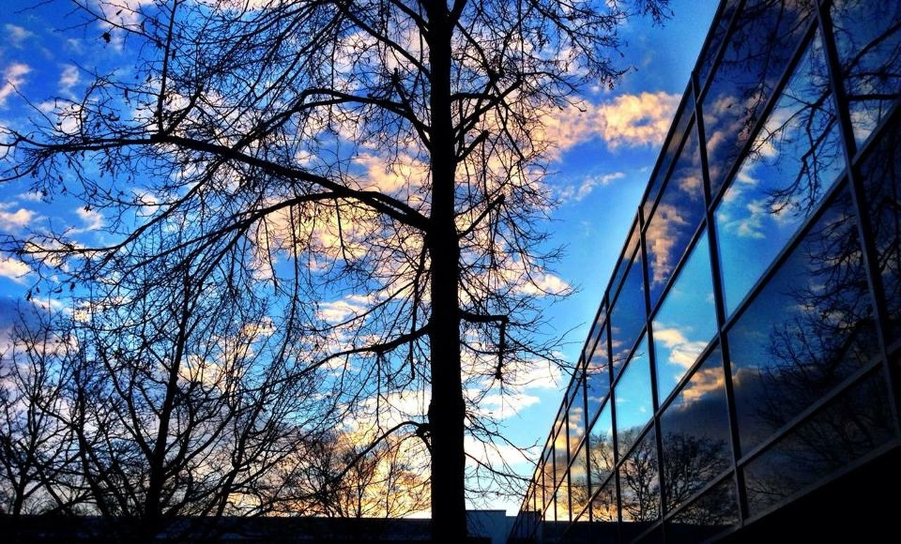 tree, bare tree, sky, branch, no people, low angle view, nature, cloud - sky, outdoors, day, beauty in nature, scenics, tranquil scene, blue, tranquility, tree trunk, silhouette, sunlight