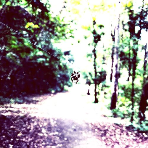 Day Animal Themes Insect Nature One Animal Outdoors Animals In The Wild No People Close-up Apider Spider In The Forest IPhoneography Object Enhancement