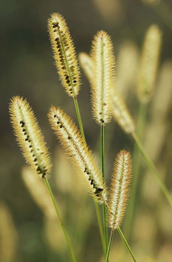Plants in the morning Back Light Backlight Bright Grass Light Morning Natural Nature Nature Photography Plant Sunlight Sunny Back Lit Close Up Close-up Close-up Shot Day Fountain Grass Growth Macro Nature Outdoors Plant Stem Sunny Day